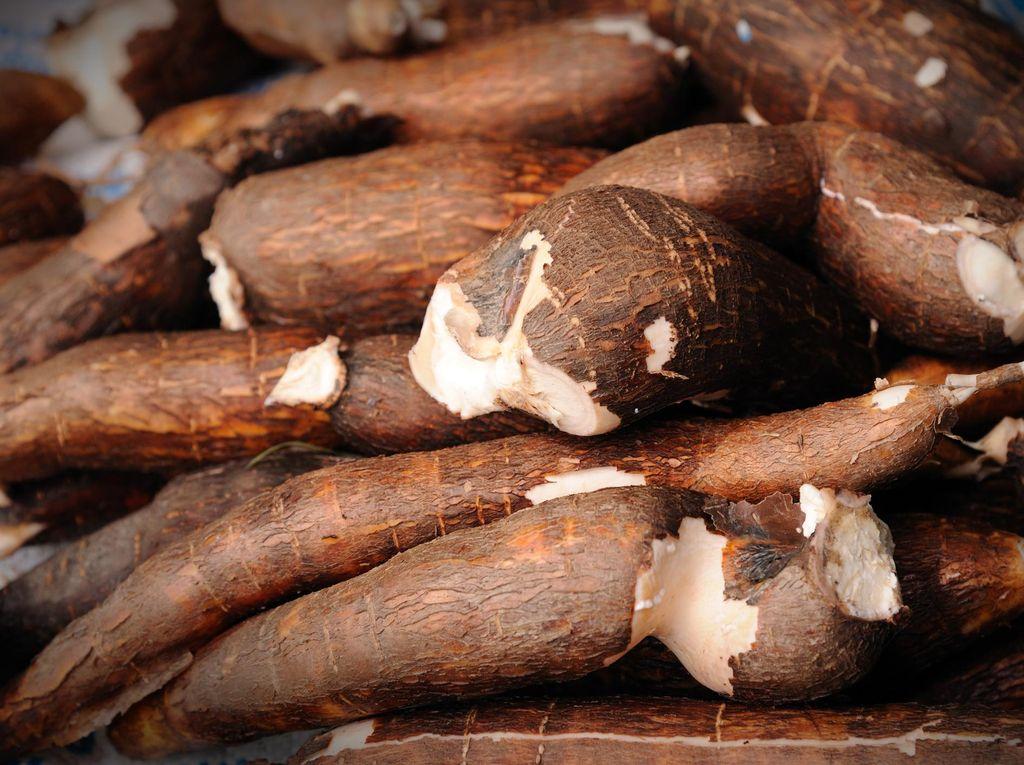 Ratusan Ton Singkong Impor Masuk RI Dalam Sebulan