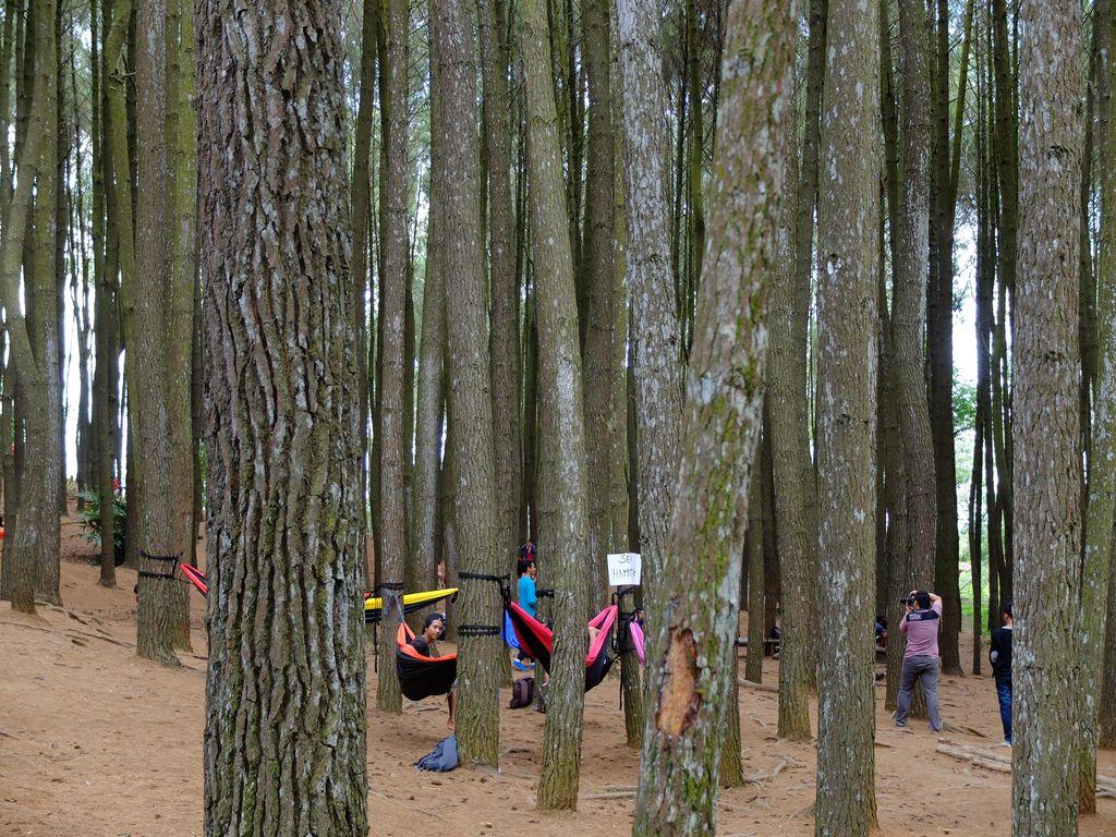 Seputar Hutan Pinus Mangunan, Wisata Instagramable di Yogyakarta