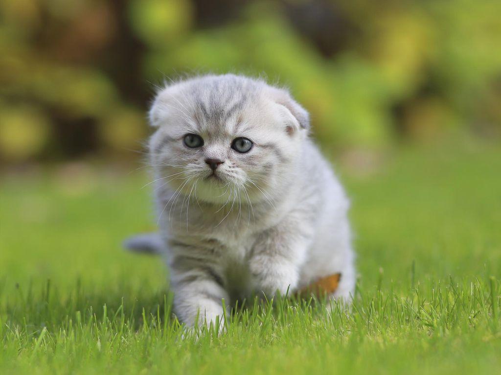 Kasus Penyiksaan Hewan yang Viral: Kucing Dicekoki Ciu, Anjing Ditembak