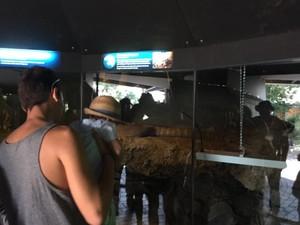 Komodo & Ular Piton Asli Indonesia di Kebun Binatang Sydney