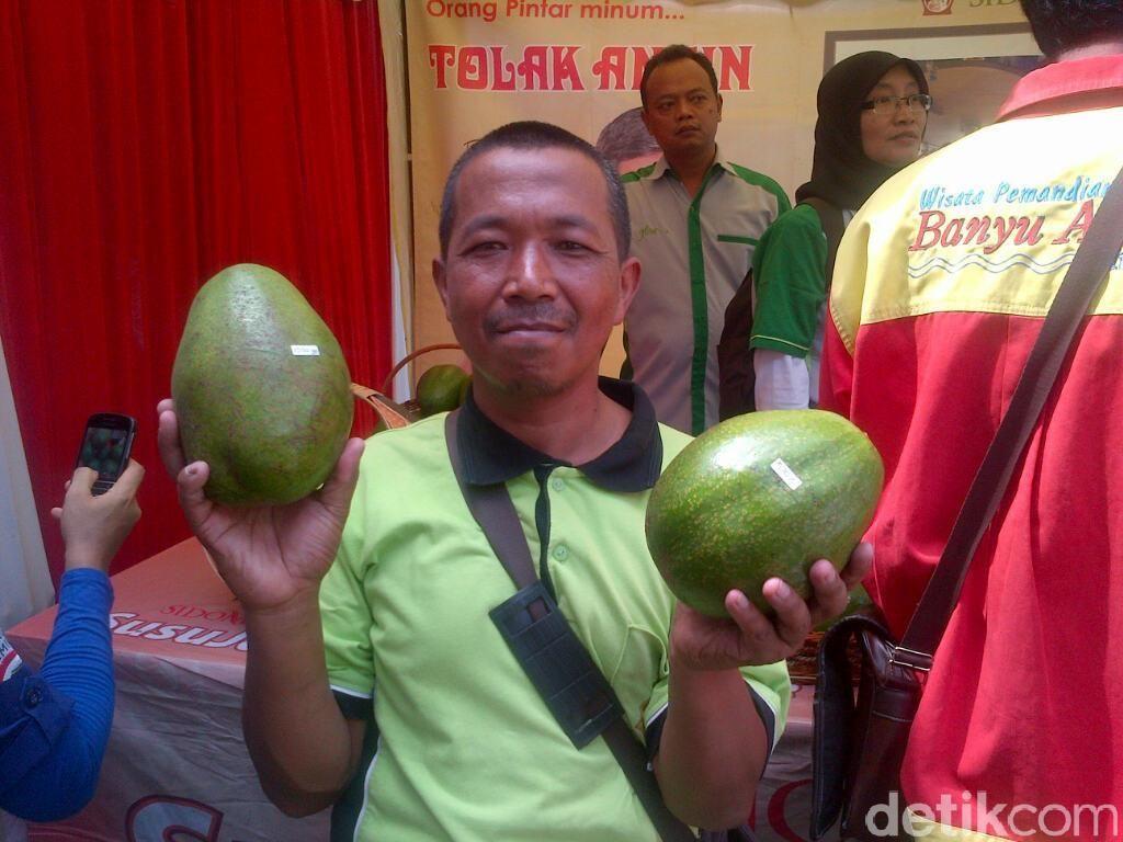 Wow, Alpukat yang Ditanam Petani Semarang ini Berukuran Jumbo