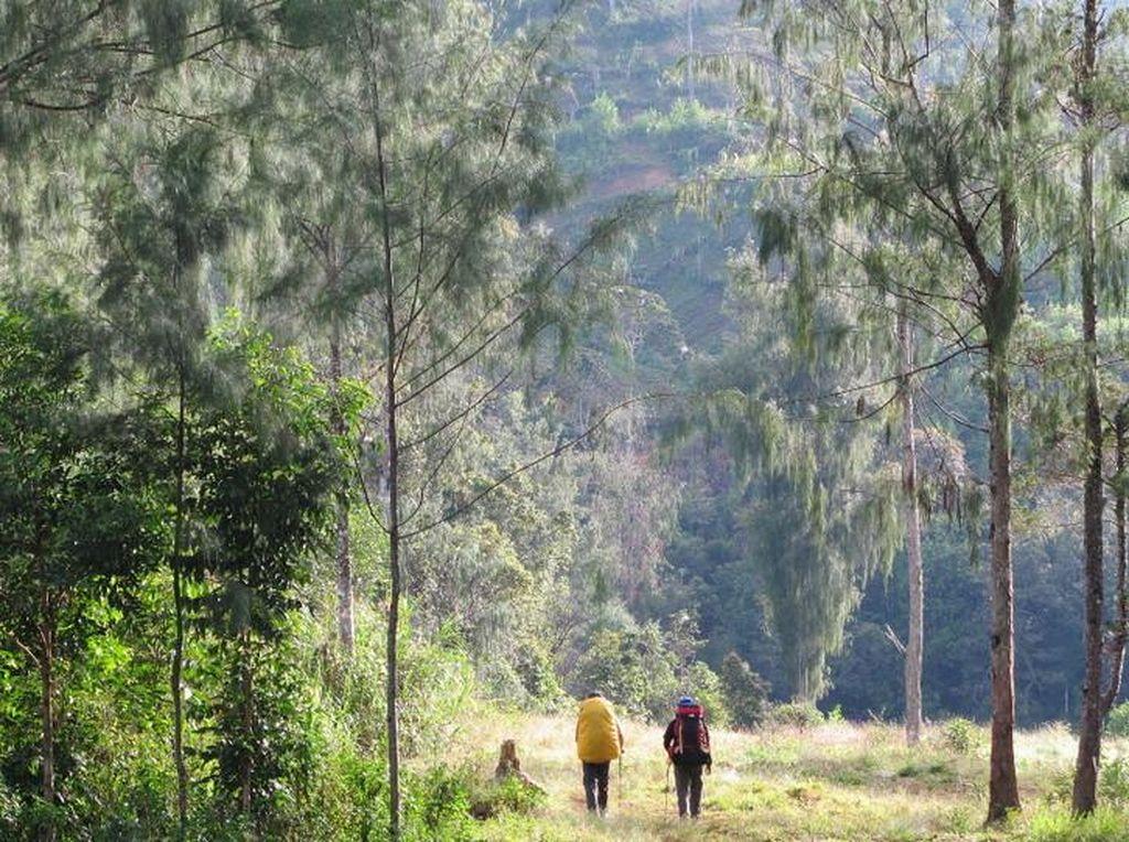 #savepapua Trending, Perusahaan Korsel Diduga Bakar Hutan Nyaris Seluas Seoul