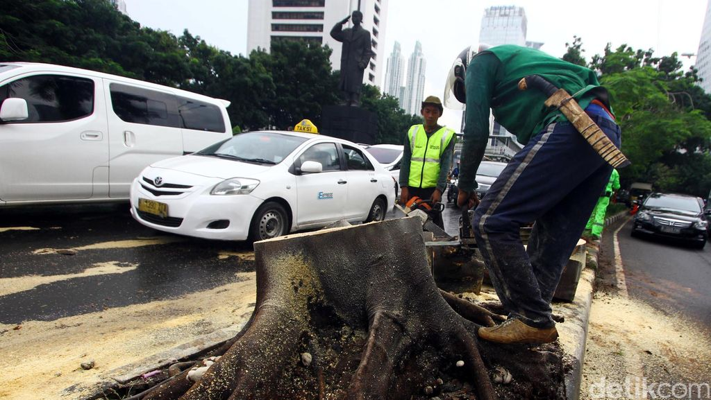 Pohon Tumbang di Sudirman Dibersihkan