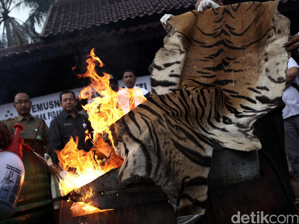 Pemusnahan Barang Bukti Kulit Harimau dan Buaya