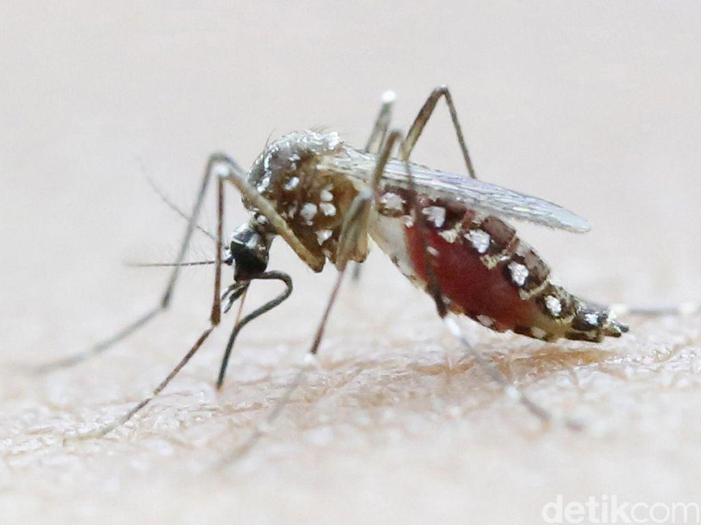 Pasca Zika, Brazil Dihantui Wabah Demam Kuning