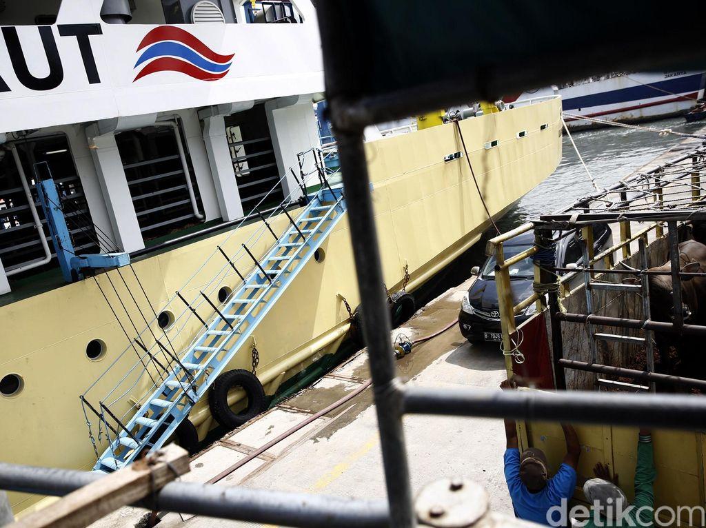 Kapal Ternak Jilid 2 Siap Berlayar Angkut 500 Sapi NTT ke Jawa