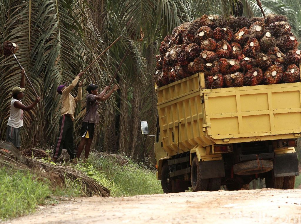 RI Raja Kelapa Sawit, Tapi Masih Impor Minyak Goreng
