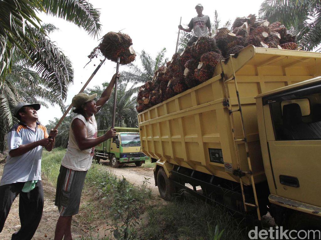 Ingatkan Bahaya Kelaparan, Petani Sawit Minta RI Tak Lockdown