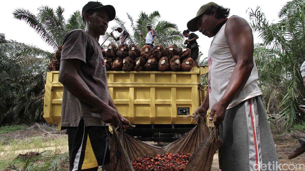 Andalkan Sawit, BRI Agro Bidik Penyaluran Kredit Rp 10 Triliun