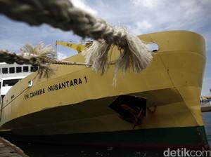Mau Kirim Sapi dari NTT ke Jakarta Pakai Kapal Ternak? Ini Caranya