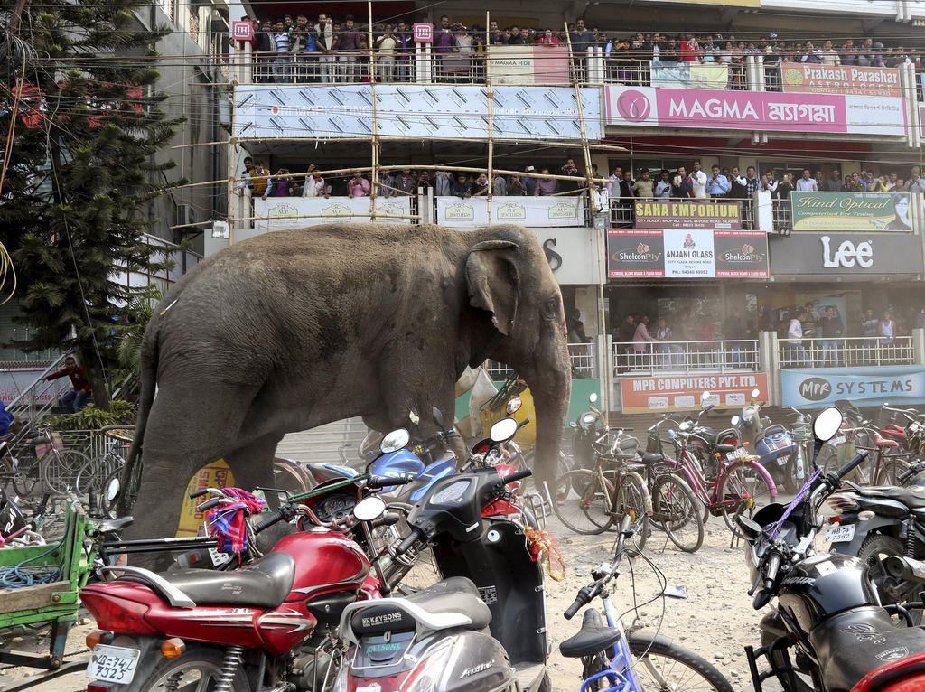 Seekor Gajah Liar Mengamuk di India