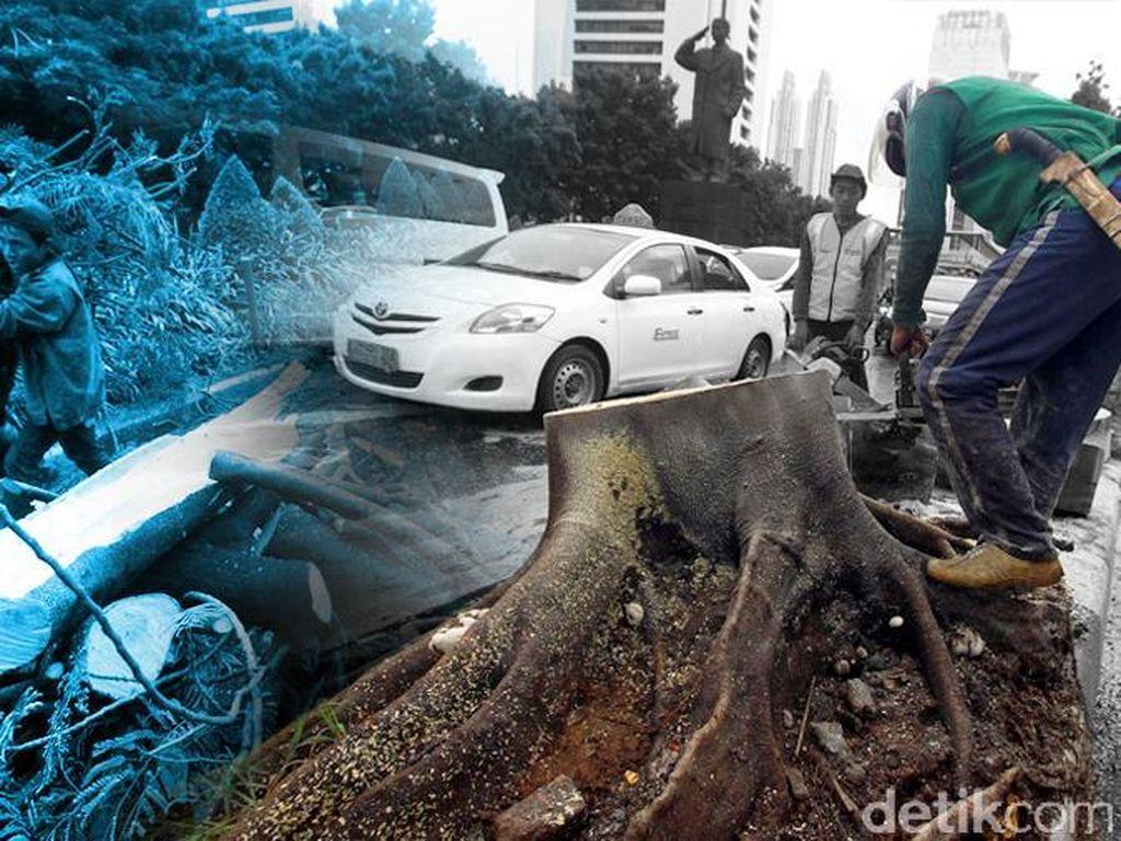 Diguyur Hujan Deras-Angin Kencang, Ini Titik Pohon Tumbang di Kota Bogor