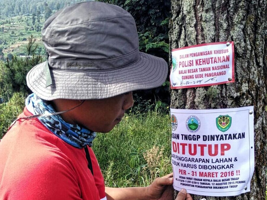 Tebang Pohon Rasamala di Gunung Pangrango, Warga Cianjur Dibui 1 Tahun