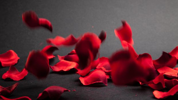 Ilustrasi kelopak bunga mawar