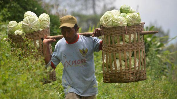 Petani memanen kubis di perkebunan kubis Sarangan, Magetan, Jawa Timur, Rabu (24/2). Menurut petani harga kubis di tingkat petani saat ini Rp2.000 per kilogram, tergolong rendah dibanding pada saat harga tinggi mencapai Rp5.000 per kilogram. ANTARA FOTO/Siswowidodo/pras/16
