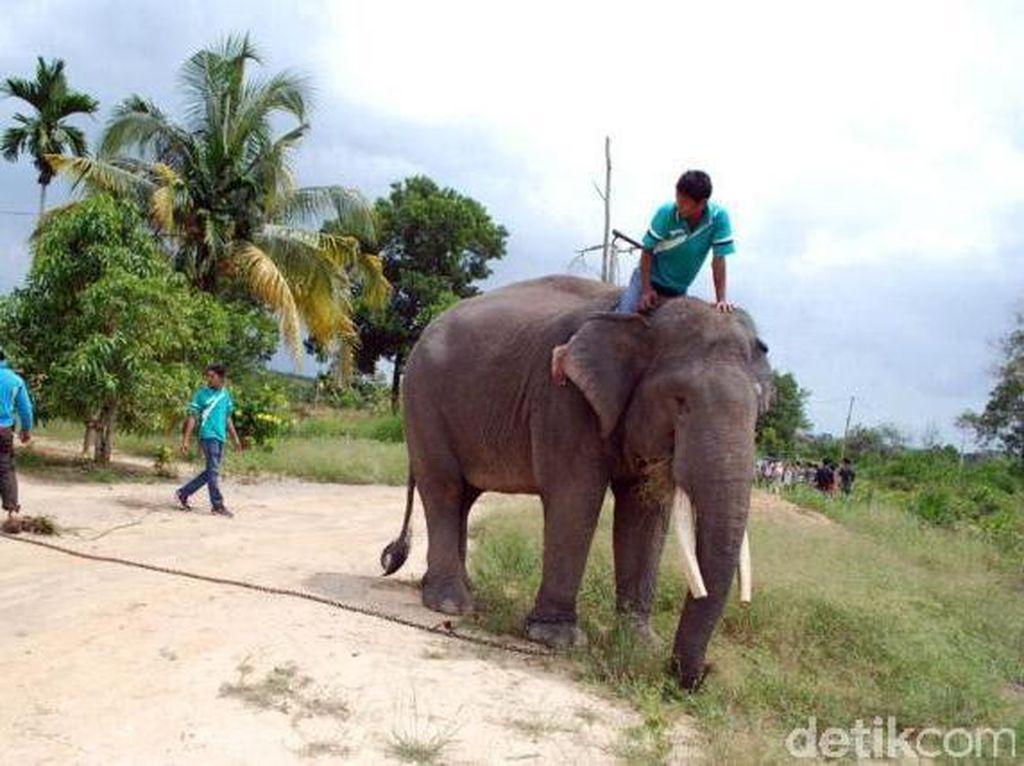 Kepala Balai TNTN Pastikan Gajah Jinak Aman dari Karhutla
