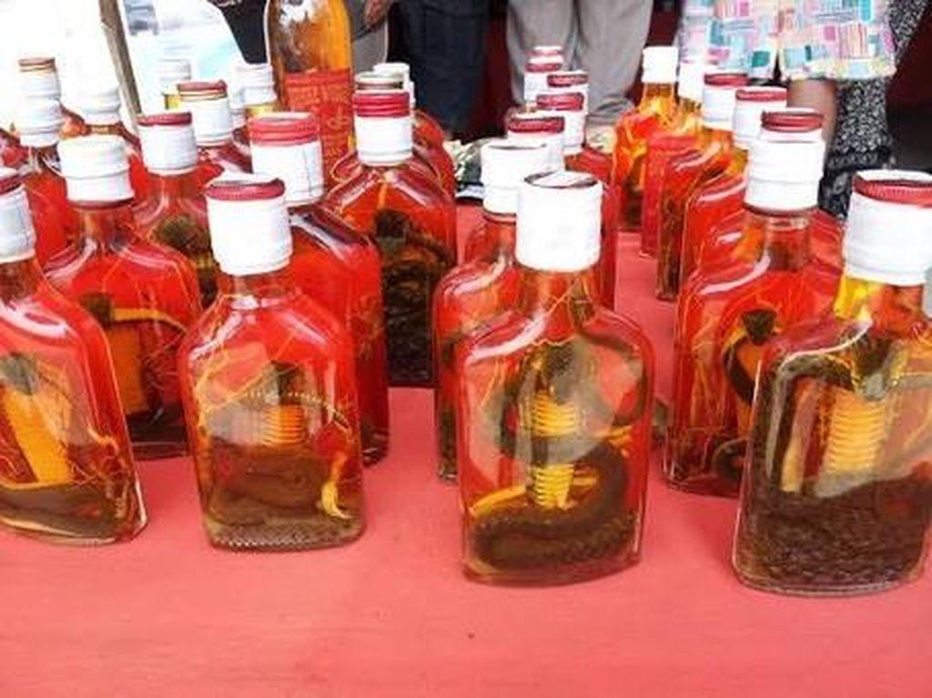 Bukan Arak Bali, Ini Whiskey Kobra & Kalajengking Khas Laos