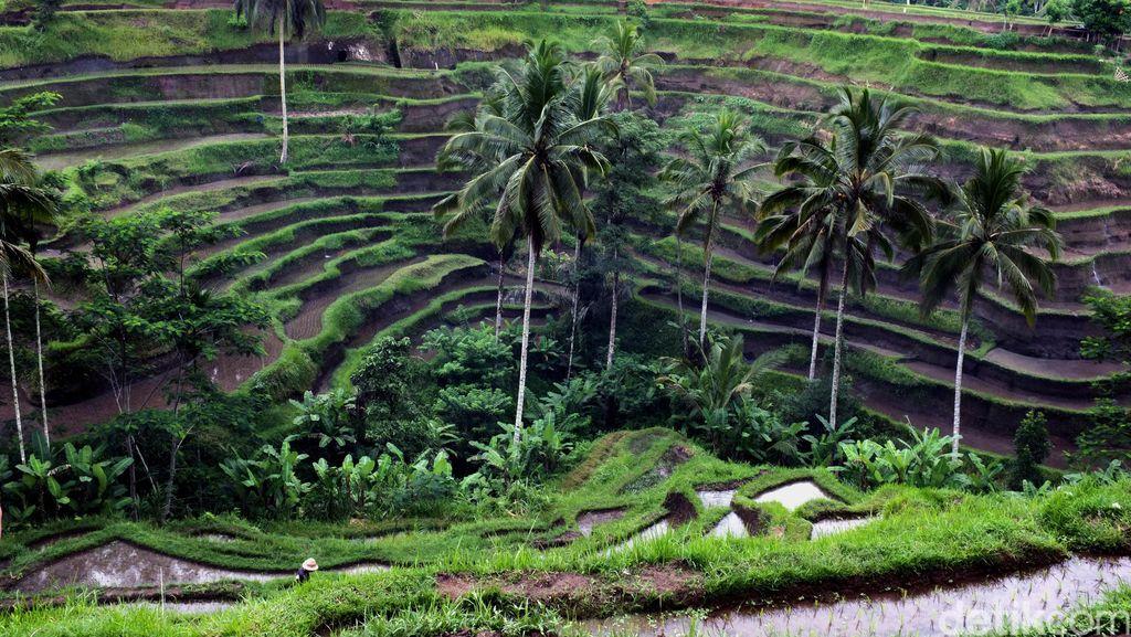 4 Destinasi Indonesia yang Makin Cantik Saat Musim Hujan