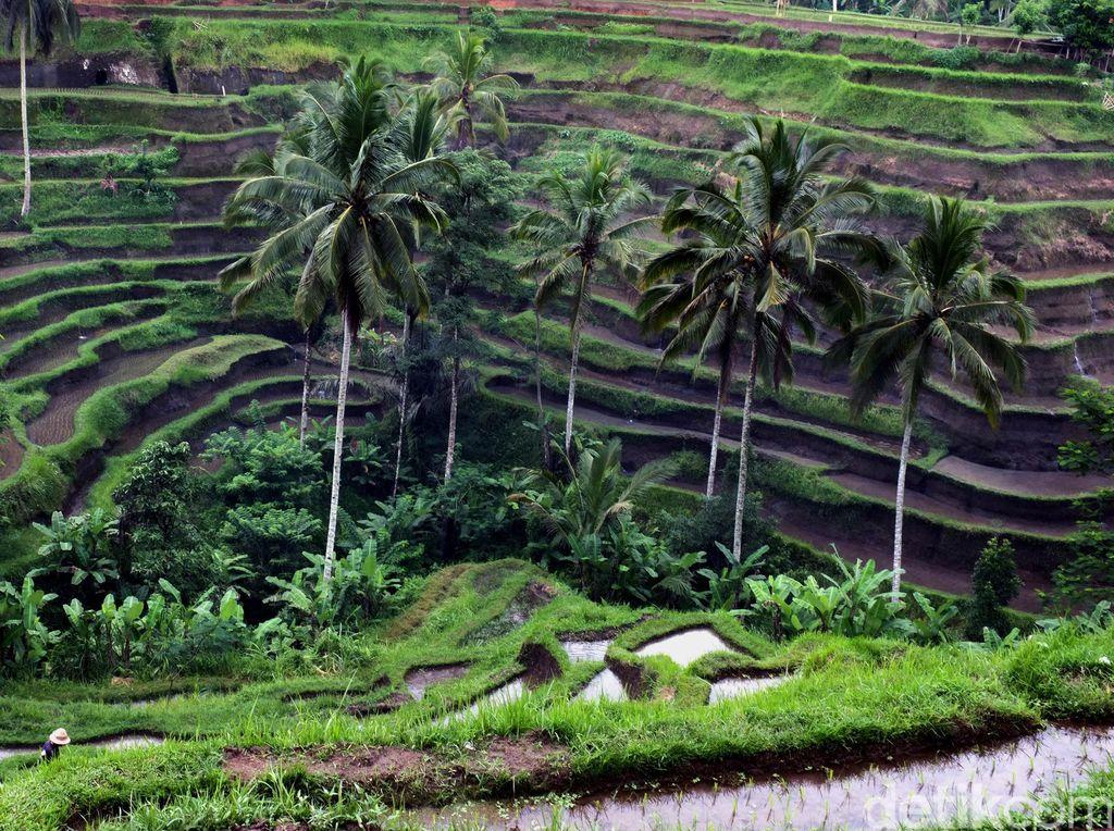 Kondisi Alam Wilayah Indonesia dan Ciri-ciri Khususnya