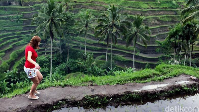Keindahan sawah di Ubud, Bali (Dikhy Sasra/detikTravel)
