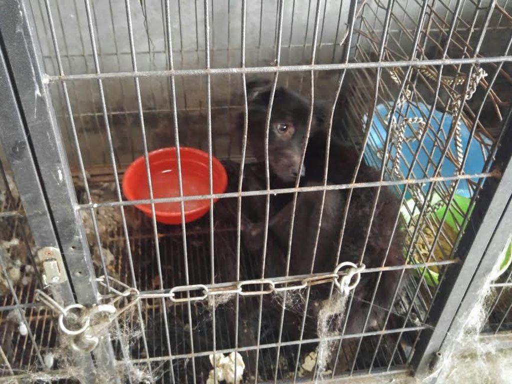 Pemilik Meninggal Dunia, 14 Anjing Mati Kelaparan di Gunung Sindur