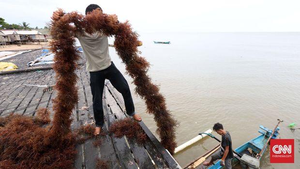 7 Kantong Plastik Alternatif, dari Singkong hingga Kulit Ikan