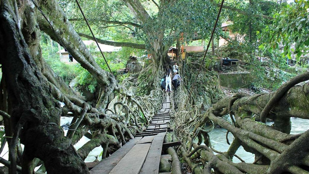 Potret Jembatan Akar Berusia 100 Tahun di Painan, Pesisir Selatan