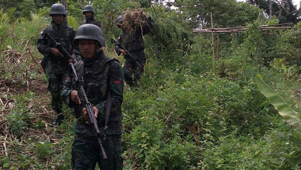 TNI Temukan Ladang Ganja di Papua