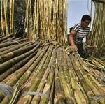 Omzet Tipis, Banyak Petani Tebu Jual Lahan ke Pengembang Rumah