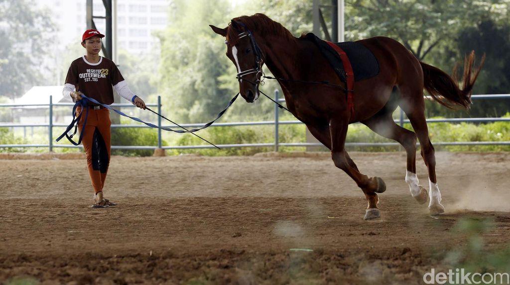 Melihat Pelatihan Kuda di Pulomas