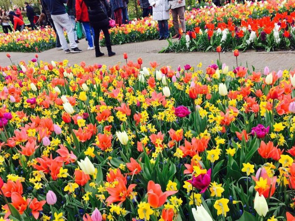 Hati Berbunga-bunga di Taman Keukenhof, Belanda
