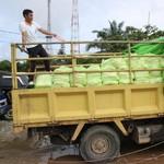 Nasib Miris Petani Tebu di Tengah Upaya Pemerintah Tekan Harga Gula
