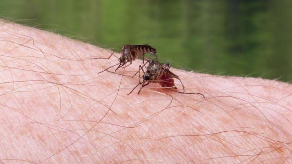 April: Indonesia Menargetkan Percepatan Eliminasi Malaria