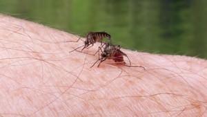 Kenali, Stadium Parasit Malaria Saat Berada di Tubuh Manusia