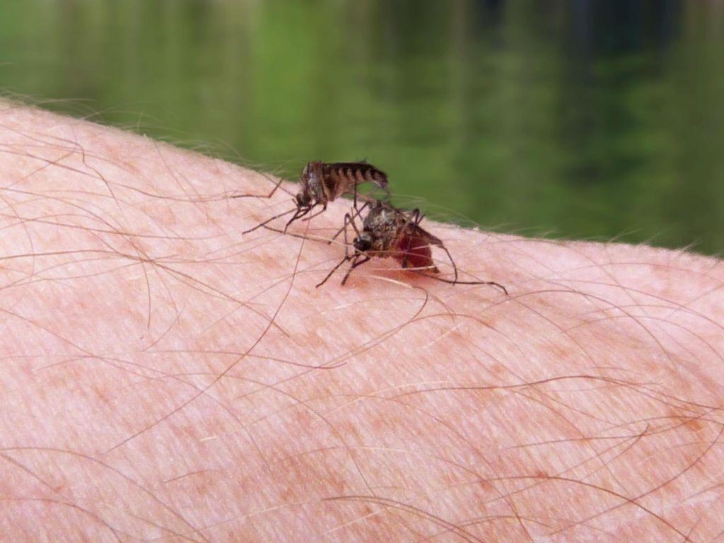 Saran Ahli Agar Rumah Tak Jadi Sarang Nyamuk Saat Ditinggal Mudik