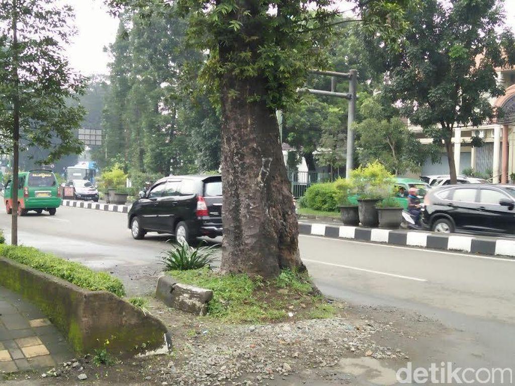Menjaga Pohon di Perkotaan