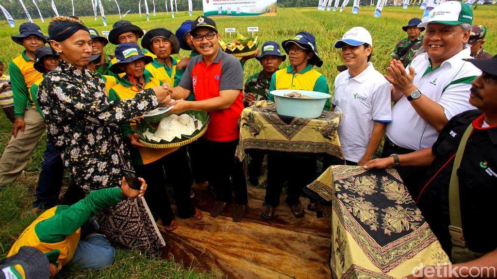 Panen Raya Padi Program GP3K di Yogyakarta