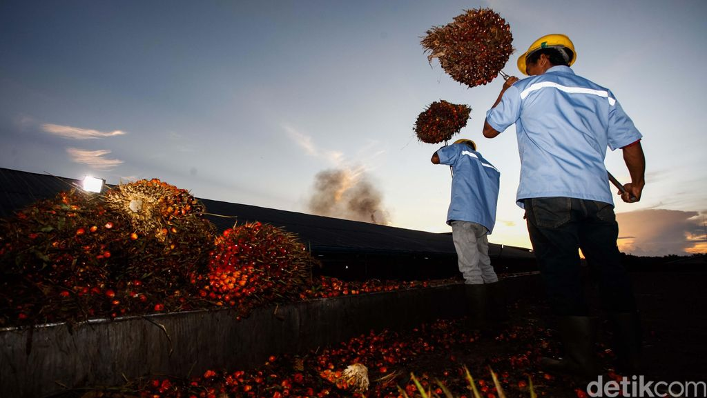 Sawit RI Paling Banyak Diekspor ke India dan China