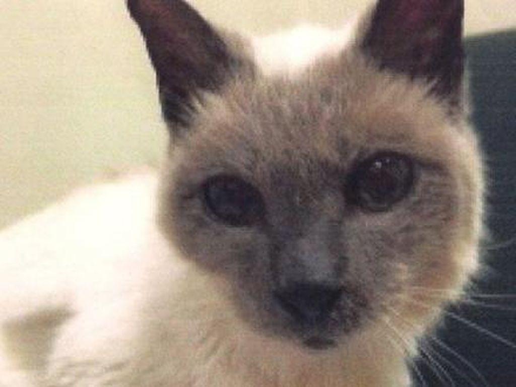 Temui Scooter, Kucing Tertua di Dunia Berusia 30 Tahun