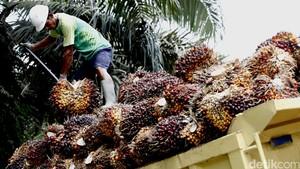 Produk Sawit Dijegal India, RI Bisa Tiru Langkah Malaysia
