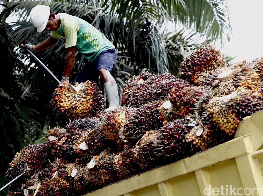 150 Hektar Hutan Produksi di Aceh Dirambah, Polisi Sita Alat Berat