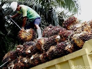 Utang Bakrie Sumatera Rp 13,5 Triliun, Lebih Besar dari Modalnya