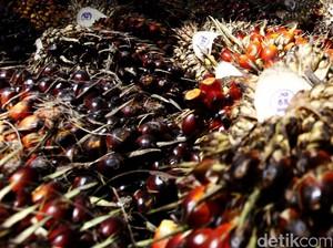 RI Bakal Tingkatkan Ekspor Minyak Sawit ke China