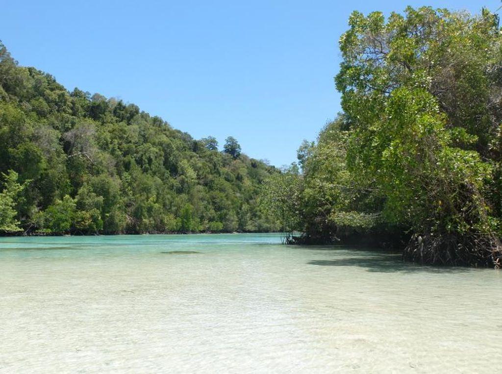 Danau Purba Kalimantan dan Ubur-ubur Langka Dunia