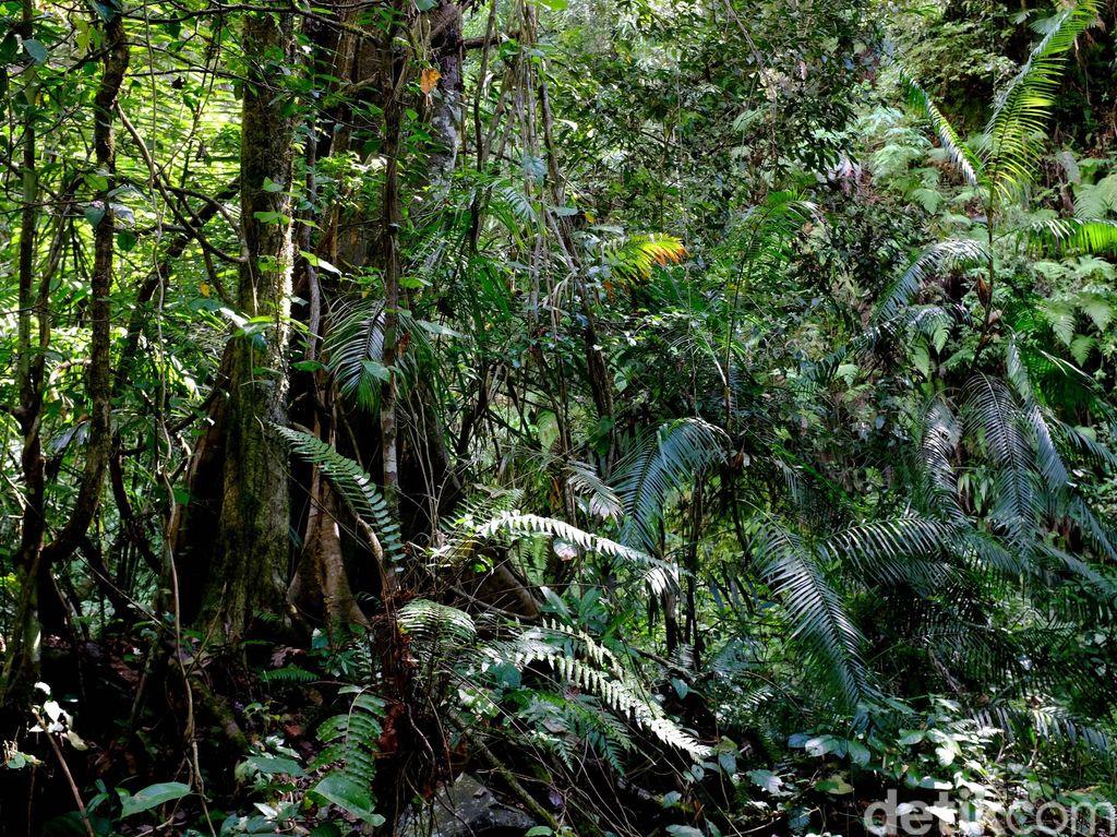Cara Kecerdasan Buatan Google Tangkap Hewan Langka di Hutan