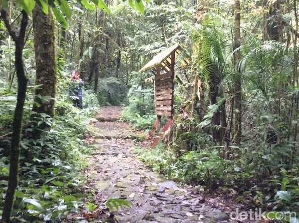 Cuaca Ekstrem, Pengelola Pangrango Tutup Aktivitas Pendakian