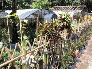 Menengok Cantiknya Kebun E-Park di Banyuwangi
