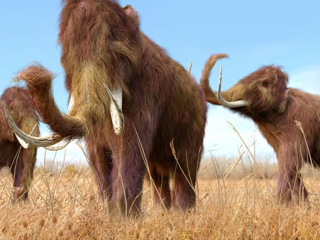 Tak Cuma Dinosaurus, Gajah Purba Juga Dimusnahkan Asteroid