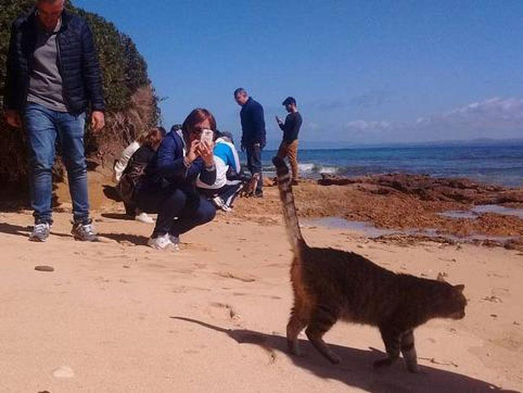 Pantai di Italia Ini Populer Gara-gara Banyak Kucing