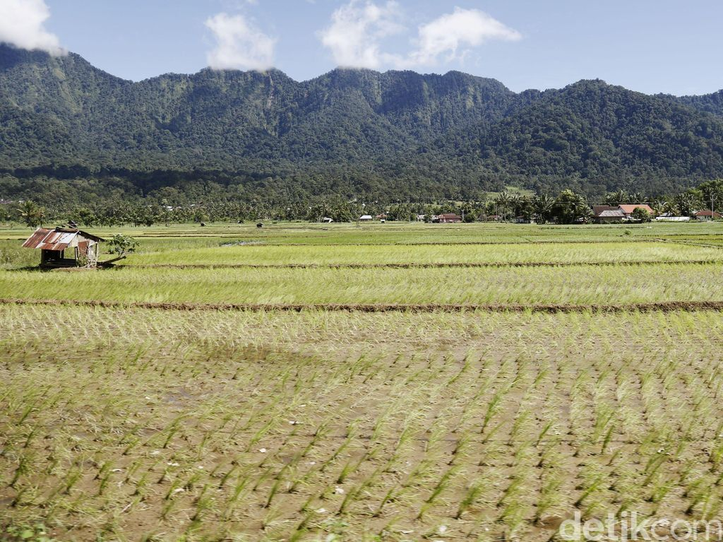 Pemerintah Siapkan 3,2 Juta Ha Lahan Pertanian di Luar Jawa